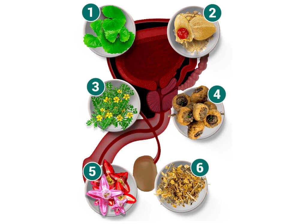 фитопрепараты простатита